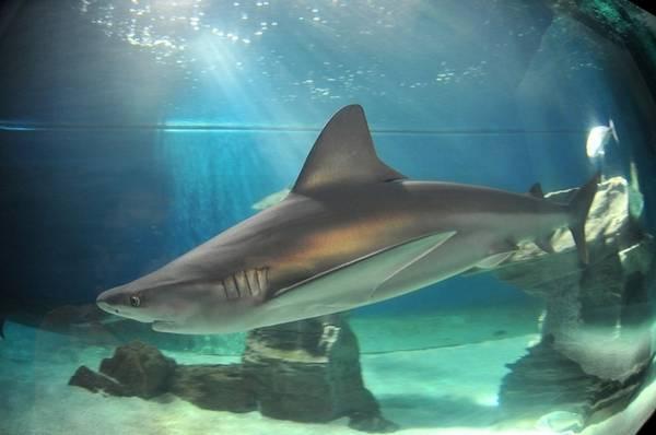 Uno squalo attrazione in discoteca