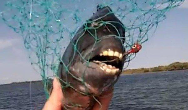 pesce con denti da uomo