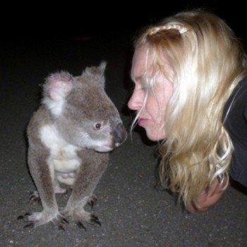 australiana innamorata di un koala