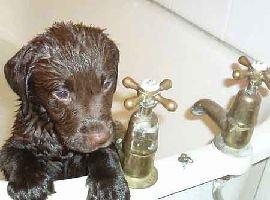 Ecco cani e gatti che fanno il bagno e sono felici