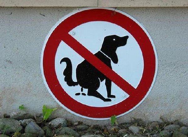 cartello stradale divertente (cane)