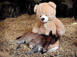 Pony orfano dorme col peluche