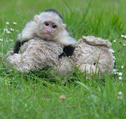 justin bieber scimmietta mally