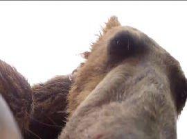 L'orso che mangia una telecamera