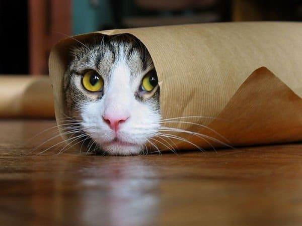 Foto strane e divertenti di animali