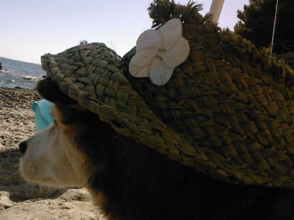 Cane con Cappello