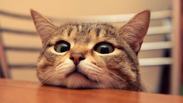Immagini simpatiche e divertenti di gatti